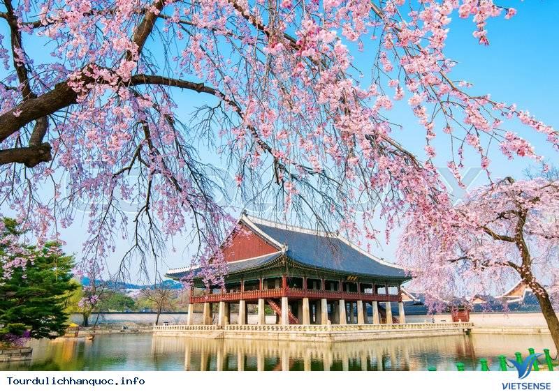 Chinh Phục Hàn Quốc Hành Trình Seoul - Nami - Everland - Yoido Park - Ngắm Hoa Anh Đào