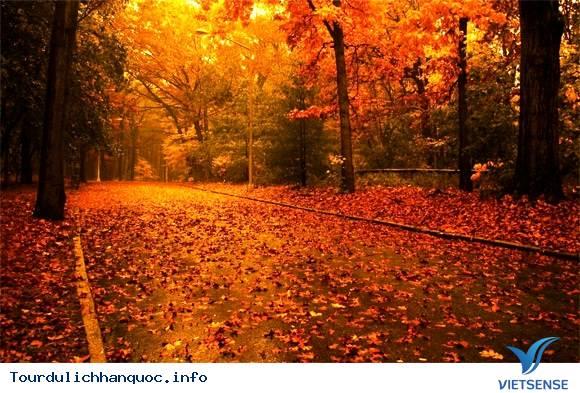 Seoul - Nami - Everland - N Tower - Mùa lá đỏ Tháng 10, 11