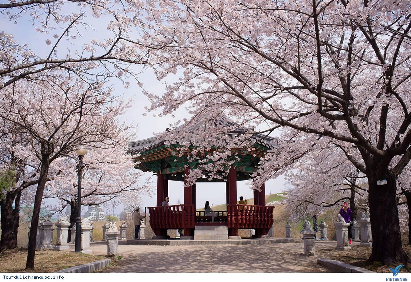 Tour du lịch Hàn Quốc 6 ngày ngắm Hoa Anh Đào ngày 05/04/2016