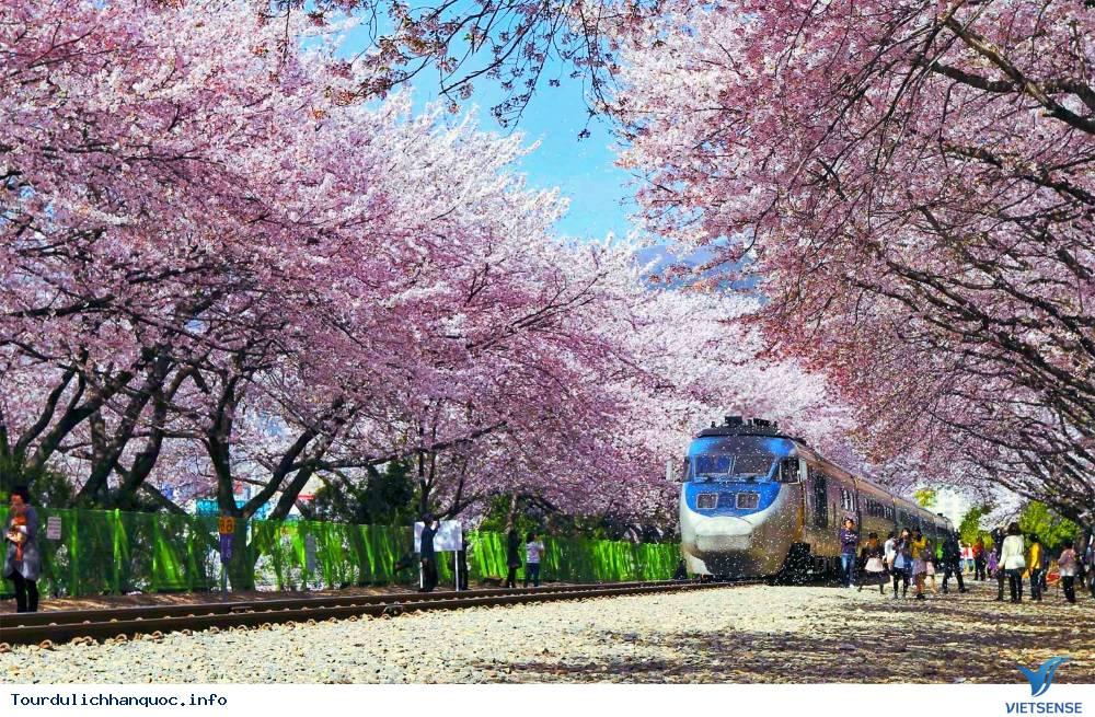Tour du lịch Hàn Quốc : SEOUL - NAMI - JEJU - EVERLAND