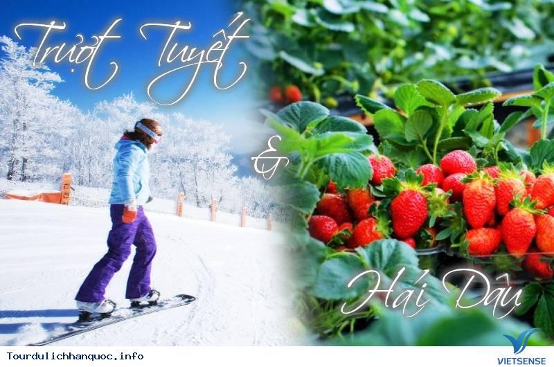 TOUR HÀN QUỐC TRẢI NGHIỆM MỚI: Trượt Tuyết & Hái Dâu Tây