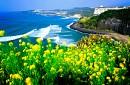 Charter Hanoi - Jeju - Hanoi 4n3d - Miễn Visa