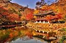 Hàn Quốc Mùa Lá Đỏ Seoul - Đảo Nami - Everland 2018