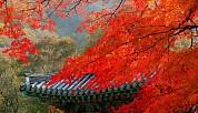 Tour Du Lịch Hàn Quốc - Mùa Lá Đỏ 4 ngày 4 đêm - TP. Hồ Chí Minh