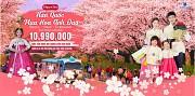 Đi du lịch Hàn Quốc 15 triệu đồng có đủ không?