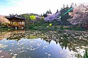Du Lịch Hàn Quốc Thời Điểm Nào Đẹp Nhất?