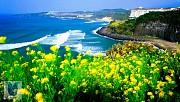 Jeju - hòn đảo xinh đẹp nổi tiếng