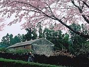 Khám Phá Những Điểm Cuốn Hút Của Hòn Đảo Jeju Xinh Đẹp