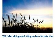 Thăm cánh đồng lau đẹp mê mẩn ở Hàn Quốc