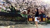 Mùa nào và thời gian nào khi đi du lịch Hàn Quốc đẹp nhất
