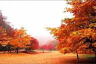 Nên đi du lịch Hàn Quốc vào mùa nào trong năm?