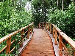 Du lịch Hàn Quốc - Chìm mình trong rừng truc xanh biếc ở xứ kim chi