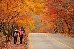 Tour Hàn Quốc:  Seoul - Đảo Jeju 6n5d từ HCM mùa lá đỏ bay Asiana Airlines