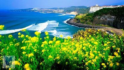 Jeju - hòn đảo xinh đẹp nổi tiếng của Hàn Quốc
