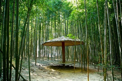 Rừng Tre Juknokwon