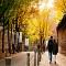 Con đường lãng mạn nhưng dính lời nguyền ở Hàn Quốc