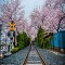 Du Lịch Nhật Bản và Hàn Quốc mùa hoa Anh Đào