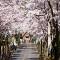 Hai Điểm Ngắm Hoa Anh Đào Tuyệt Đẹp Ở Hàn Quốc