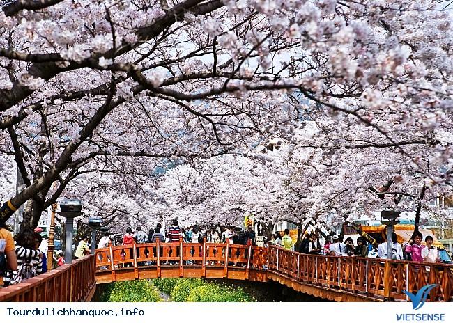 Thưởng lãm hoa anh đào tại hai địa điểm hot nhất Hàn Quốc - Ảnh 1