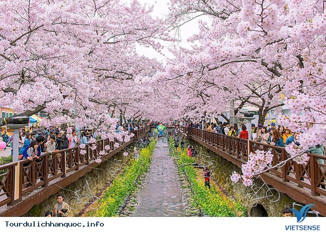 Thưởng lãm hoa anh đào tại hai địa điểm hot nhất Hàn Quốc - Ảnh 5