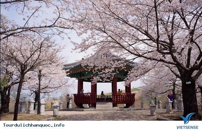 Thưởng lãm hoa anh đào tại hai địa điểm hot nhất Hàn Quốc - Ảnh 4