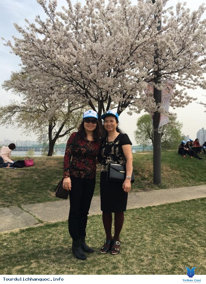 Đoàn khách đi tour du lịch Hàn Quốc: SEOUL - NAMI - EVERLAND 05/04-09/04/2016 - Ảnh 15