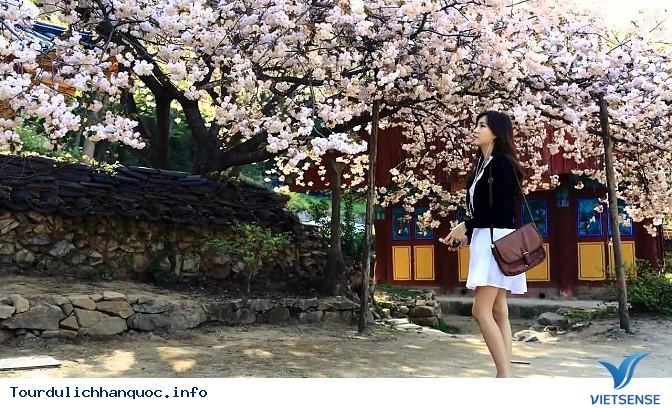 Có nên du lịch vào mùa xuân?