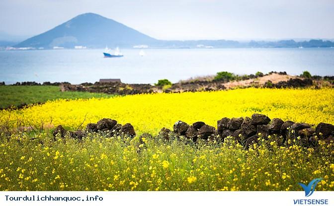 Ngắm nhìn những mùa hoa tươi sắc tại Hàn Quốc - Ảnh 2