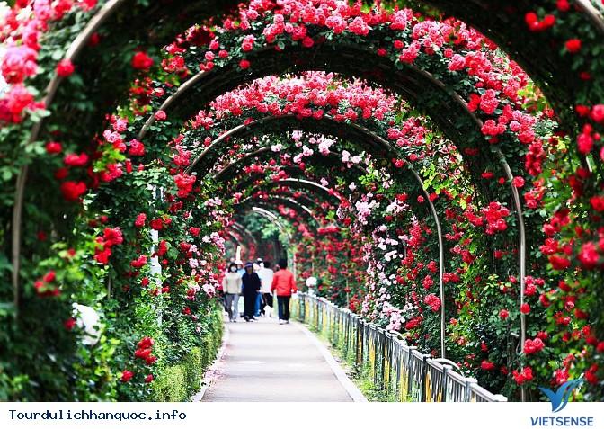 Tìm hiểu về lễ hội hoa hồng ở Hàn Quốc - Ảnh 1