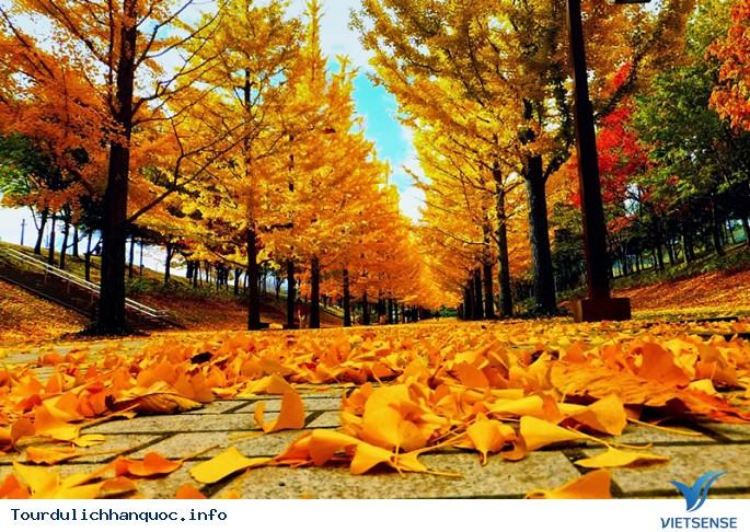 Vẻ Đẹp của Du lịch Hàn Quốc bốn mùa Xuân Hạ Thu Đông - Ảnh 3