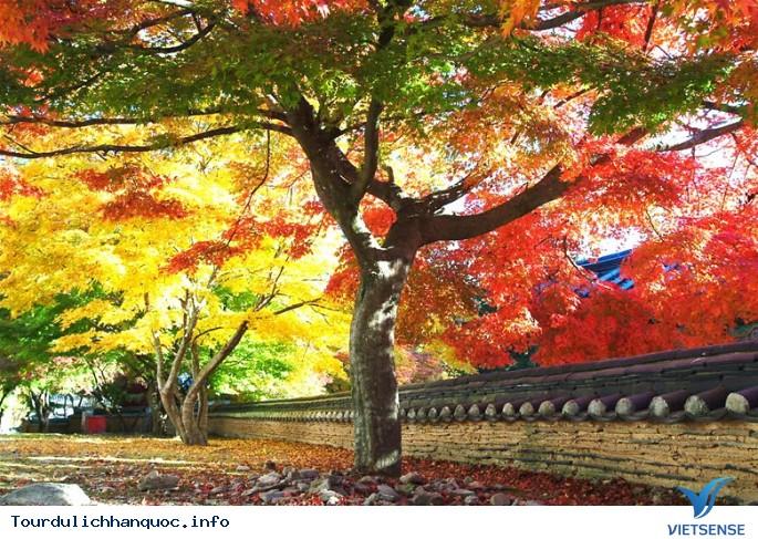 Vẻ Đẹp của Du lịch Hàn Quốc bốn mùa Xuân Hạ Thu Đông - Ảnh 2