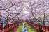 Khám Phá Hàn Quốc Hành Trình Seoul - Everland - Nami - Namsan