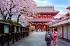 Chiêm Ngưỡng Mùa Hoa Anh Đào Tại Xứ Sở Kim Chi Hành Trình Seoul – Nami - Everland – Yoido Park