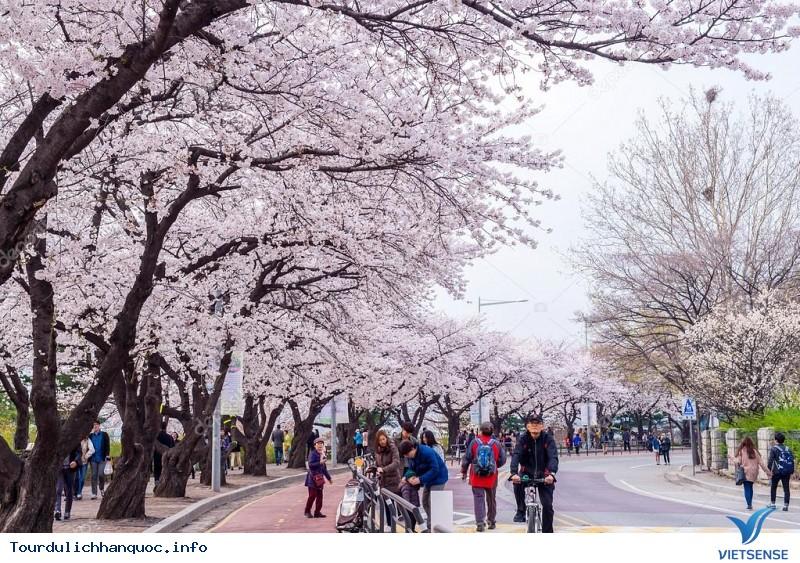 Chia sẻ kinh nghiệm và cẩm nang du lịch Hàn Quốc - Ảnh 1