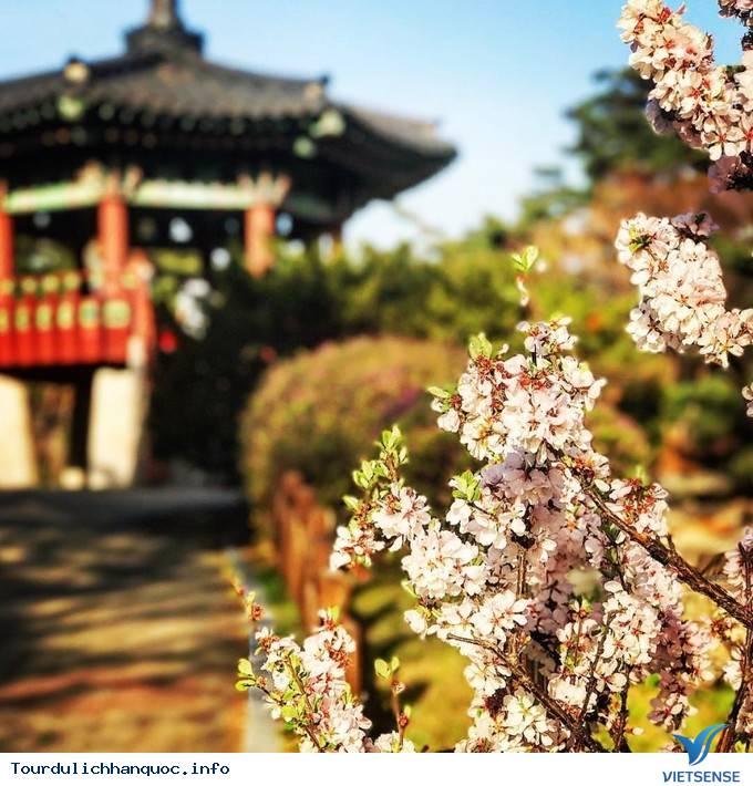 Dự Đoán Lịch Nở Hoa Anh Đào Ở Hàn Quốc 2019 - Ảnh 5
