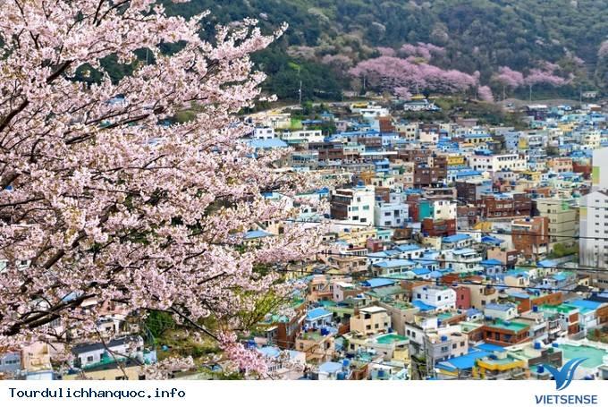 Dự Đoán Lịch Nở Hoa Anh Đào Ở Hàn Quốc 2019 - Ảnh 1