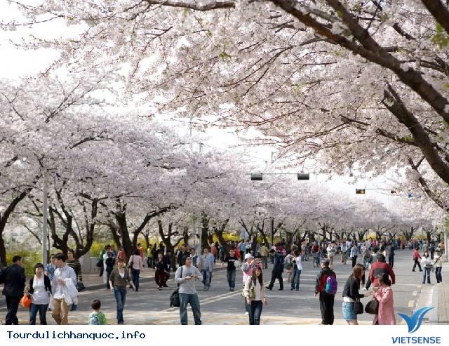 Du Lịch Hàn Quốc Tháng 4 - Ảnh 3