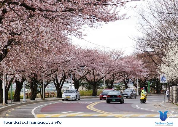 Du Lịch Hàn Quốc Thời Điểm Nào Đẹp Nhất? - Ảnh 1