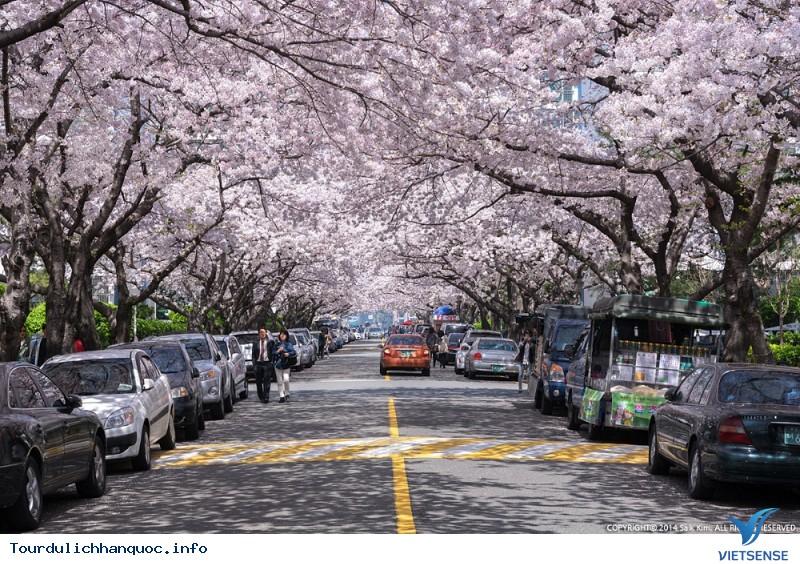 Giới Thiệu Du Lịch Busan Hàn Quốc - Ảnh 2