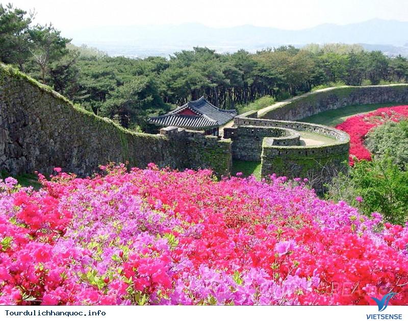 Giới Thiệu Du Lịch Đảo Jeju Hàn Quốc - Ảnh 4