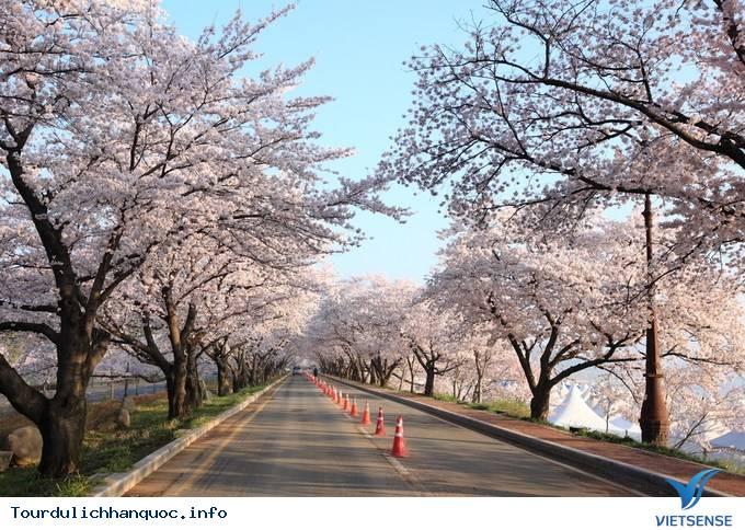 Hoa Anh Đào Hàn Quốc Nở Vào Tháng Mấy Và Tại Địa Điểm Nào - Ảnh 3