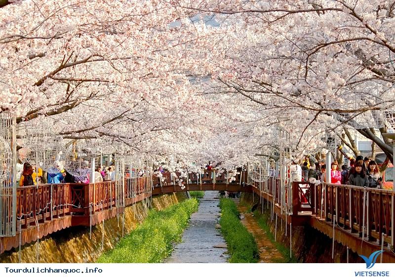 Hoa Anh Đào Hàn Quốc Nở Vào Tháng Mấy Và Tại Địa Điểm Nào - Ảnh 1