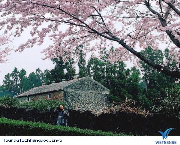 Khám Phá Những Điểm Cuốn Hút Của Hòn Đảo Jeju Xinh Đẹp - Ảnh 3