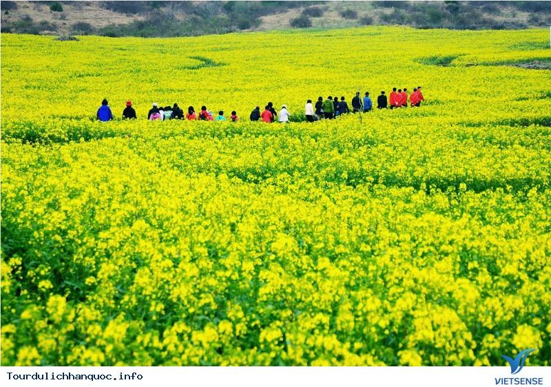 Khám Phá Những Điểm Cuốn Hút Của Hòn Đảo Jeju Xinh Đẹp - Ảnh 1