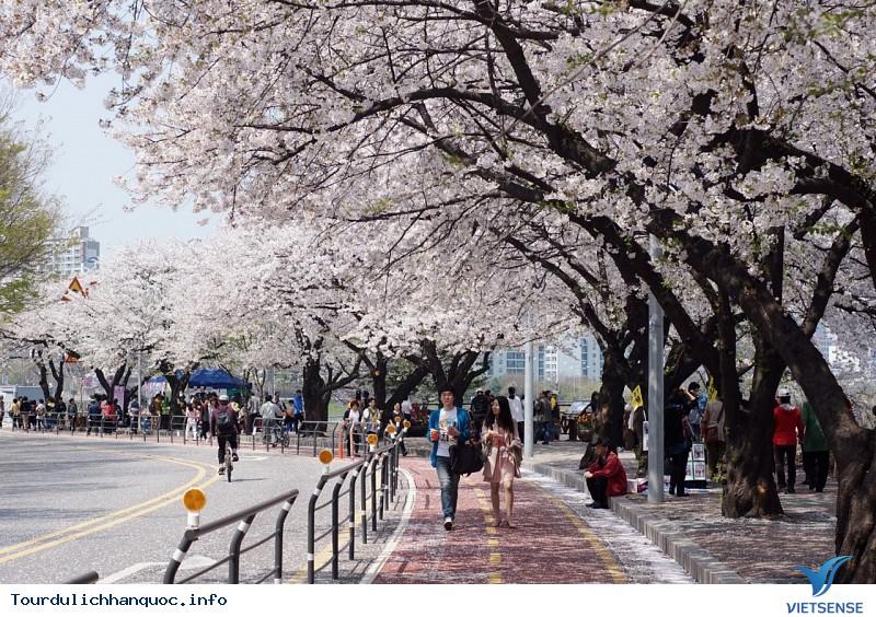 Khám Phá Những Lễ Hội Hoa Anh Đào Lớn Nhất Hàn Quốc - Ảnh 2