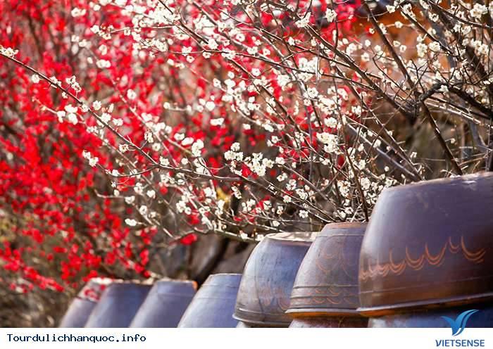 Kinh Nghiệm Du Lịch Hàn Quốc Tháng 4 - Ảnh 2