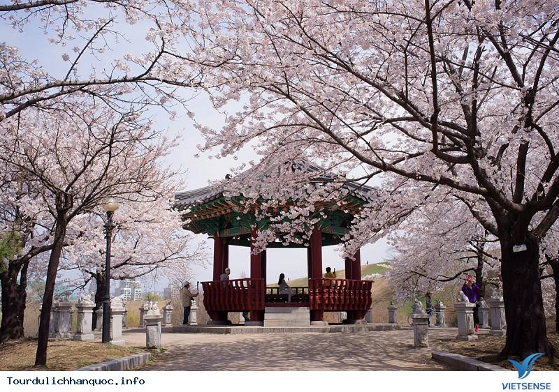 Kinh Nghiệm Du Lịch Hàn Quốc Tháng 4 - Ảnh 3