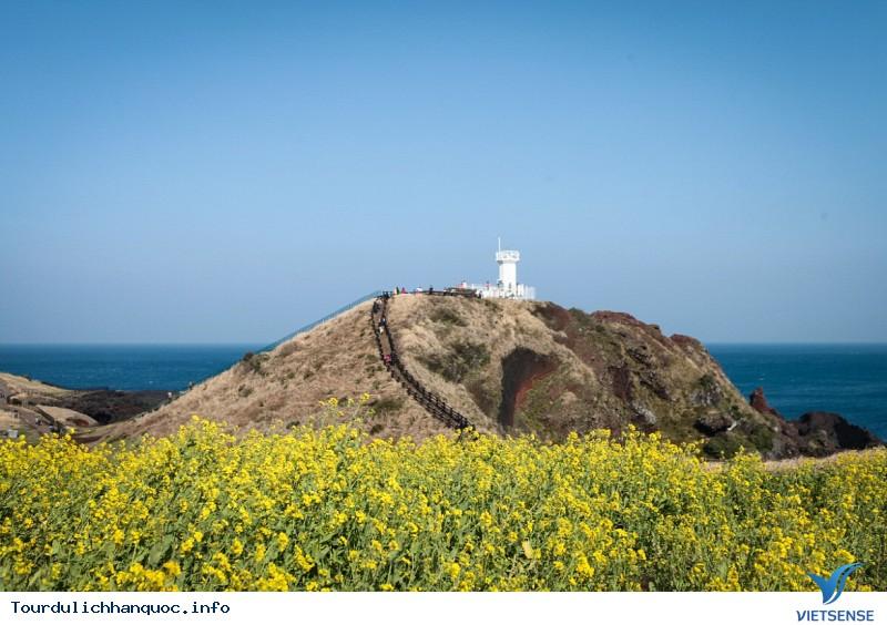 Lạc Lối Ở Jeju - Ảnh 3