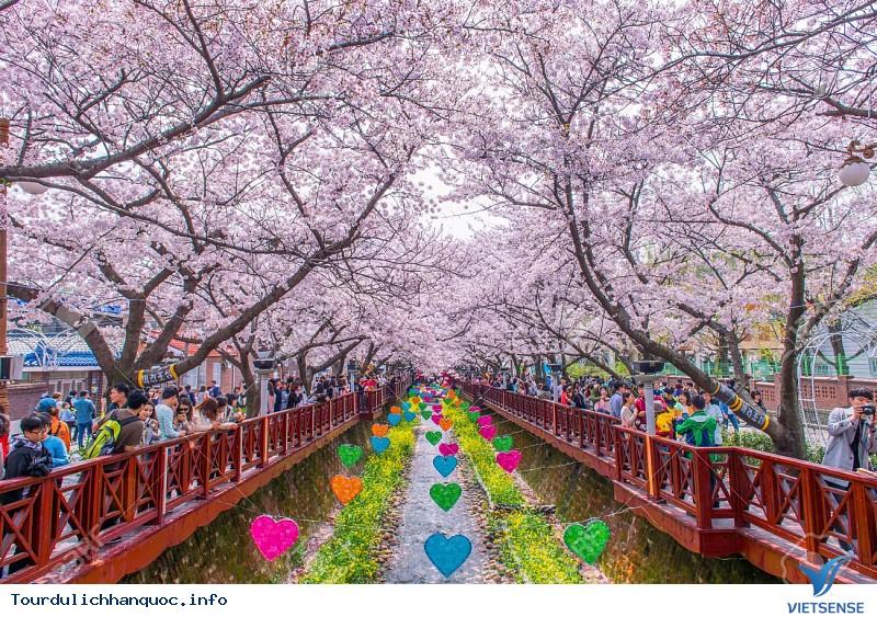 Mãn nhãn với Lễ hội hoa anh đào Jeju - Ảnh 3