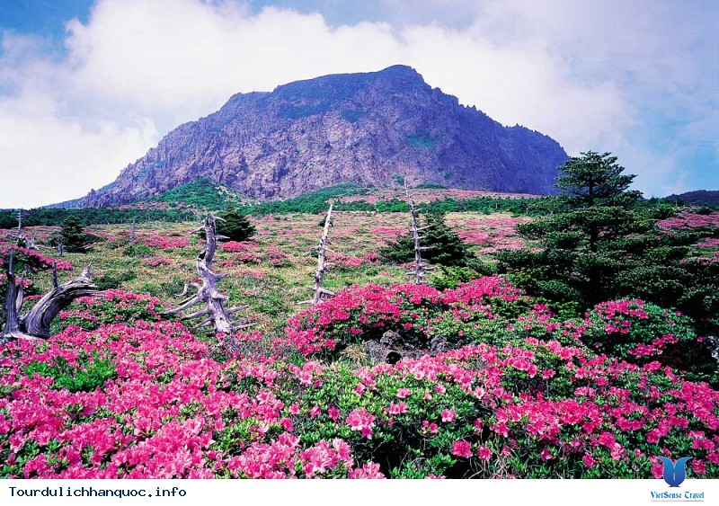 Những Điểm Du Lịch Hấp Dẫn Trên Đảo Jeju - Ảnh 6